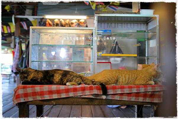 猫リンク ティエン船着場④ タイ ヲソト 野良猫 地域猫 stray alley cat Thailand แมว ไทย アンティークタイキャット