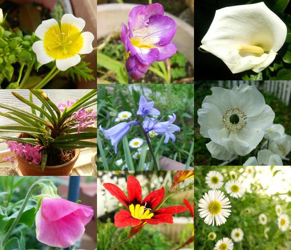 2016春の花達1