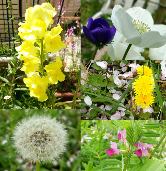 2016春の花達2