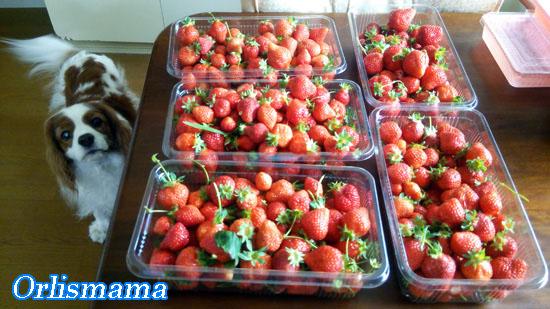 苺ジャム160503