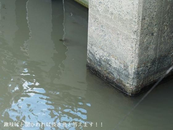 160429-01 栗東IC水路1 -01[E-M5 60Macro]