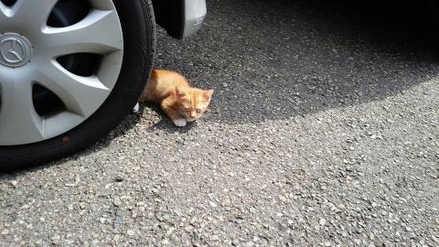 三崎港の猫、、小さいのと目にちょっと病気かなぁ・・・
