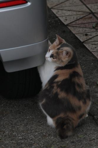 タイヤで爪研ぎ猫