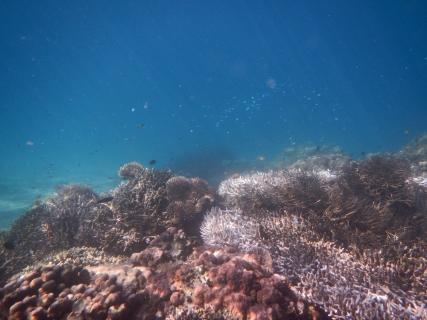 08island sea2