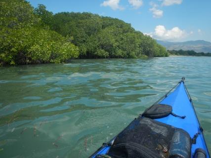 22 mangrove