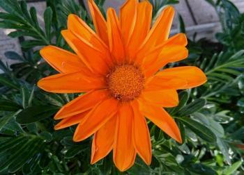 オレンジ花 350