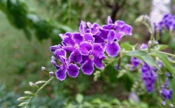 紫の花 350