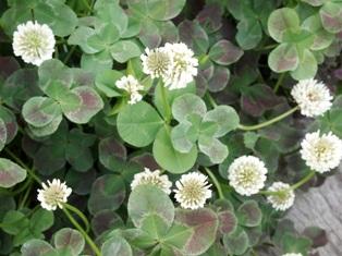 my-garden 042