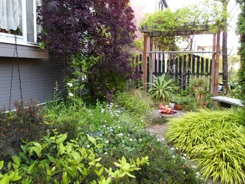 my-garden 091