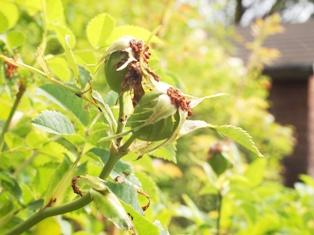 my-garden 056 (2)