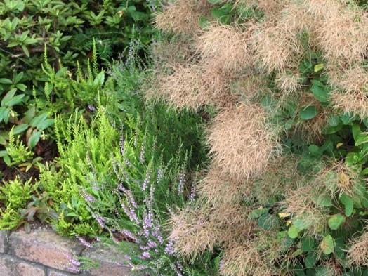my-garden 069 (2)