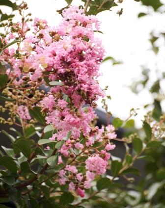 my-garden 022 (2)