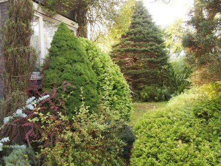 my-garden 046 (2)