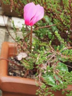 my-garden 036 (2)
