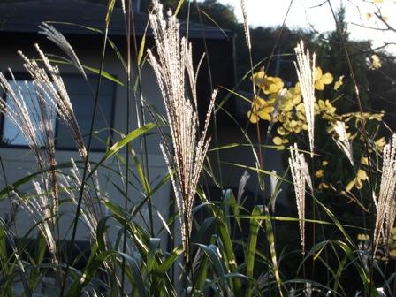 my-garden 101