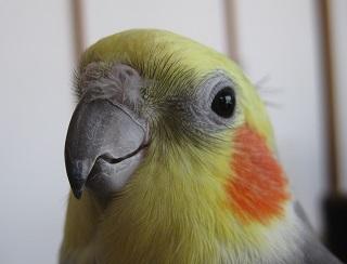 フクちゃん鼻毛