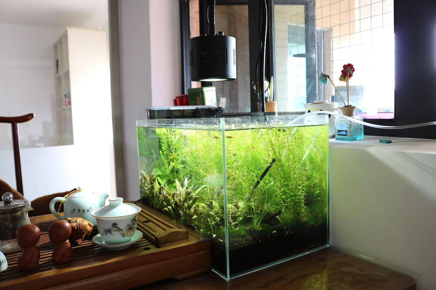 Asta 120 for freshwater tank