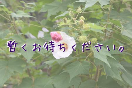DSC_3677_convert_20161004180540.jpg