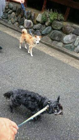 1469669048228-yuriki9.jpg