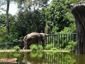 マレーシア140動物園