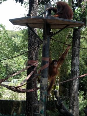 マレーシア143動物園