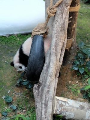 マレーシア148パンダ