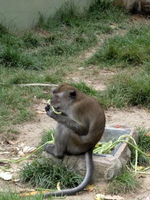 マレーシア152動物園