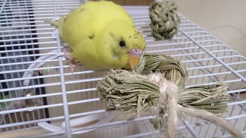 小鳥100
