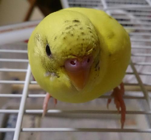 小鳥104