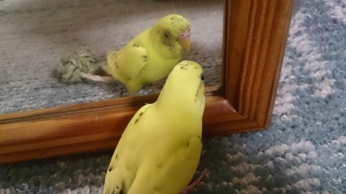 小鳥106