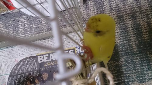 小鳥107