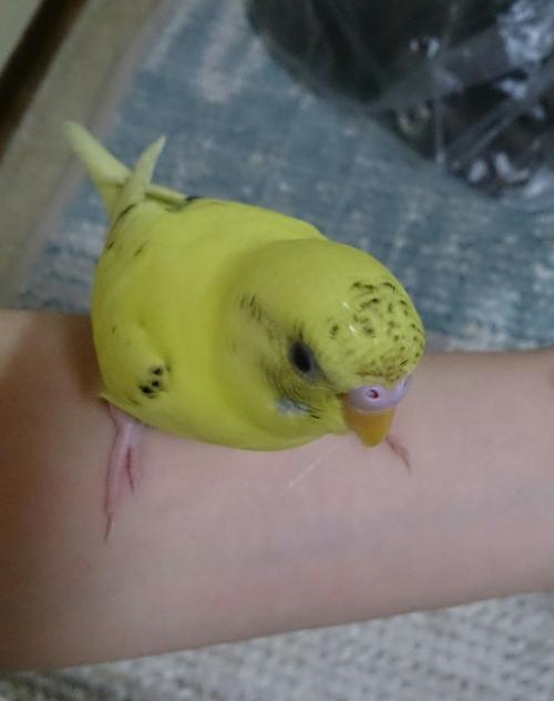 小鳥108