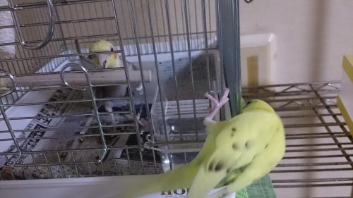 小鳥111
