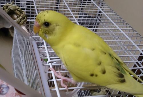 小鳥118