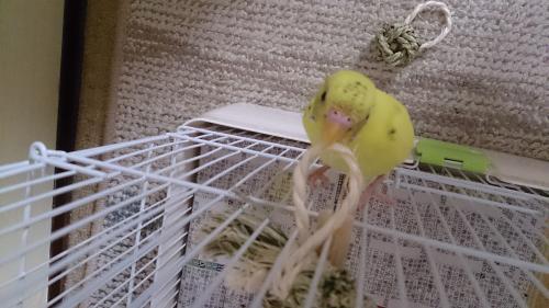 小鳥121