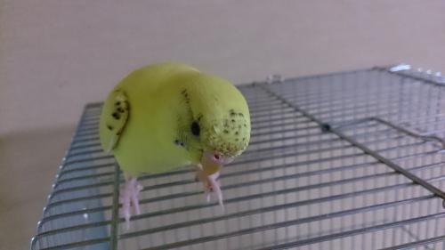 小鳥123