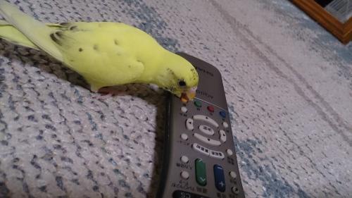 小鳥125