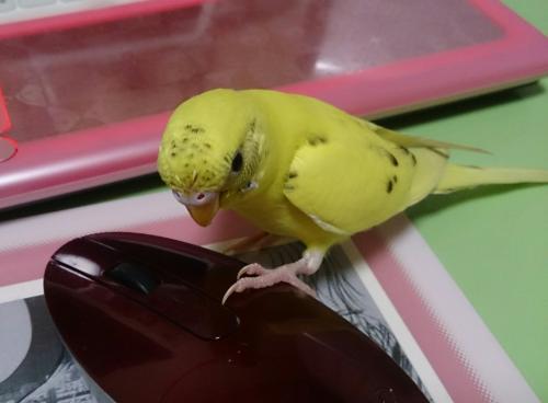 小鳥126