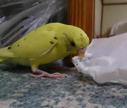 小鳥134