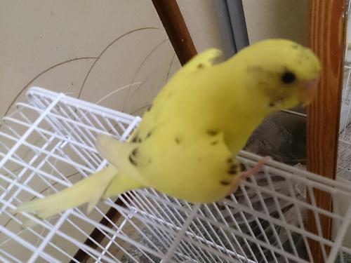 小鳥140