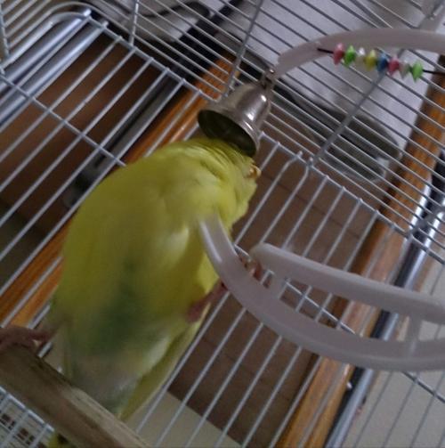 小鳥147