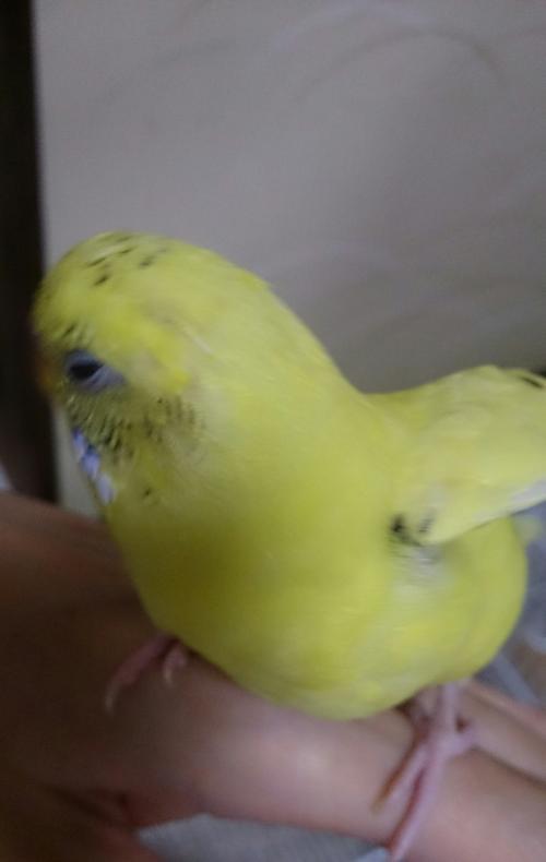 小鳥152