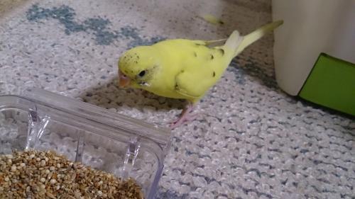小鳥154