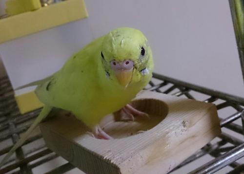 小鳥158