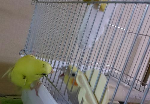小鳥169