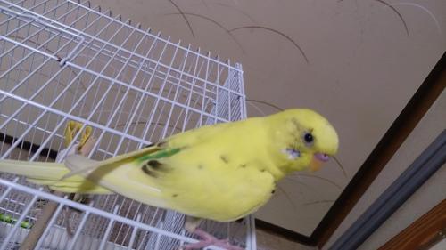 小鳥173