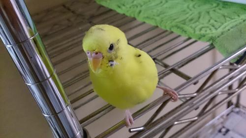 小鳥176