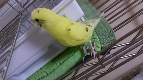 小鳥177