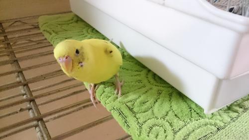 小鳥178