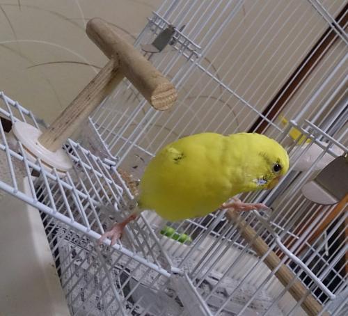 小鳥183